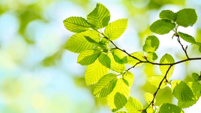 immagine foglie